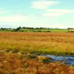 Clara-Bog-Nature-Reserve-NPW-everglow